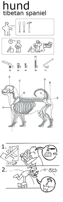 Tibetan spaniel diagram