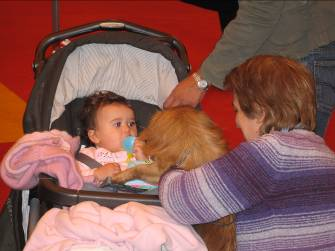Child meets Tibetan Spaniel at discover dogs